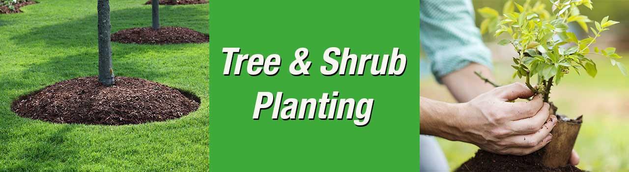 Tree And Shrub Planting Smith S Gardentown Wichita Falls