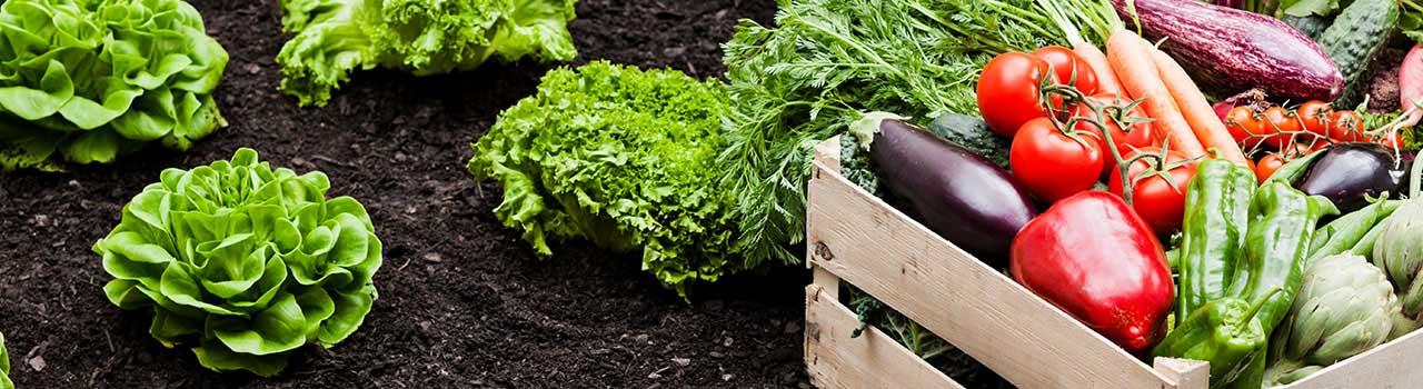 Vegetable Garden Planting Guide, Smith\'s Gardentown